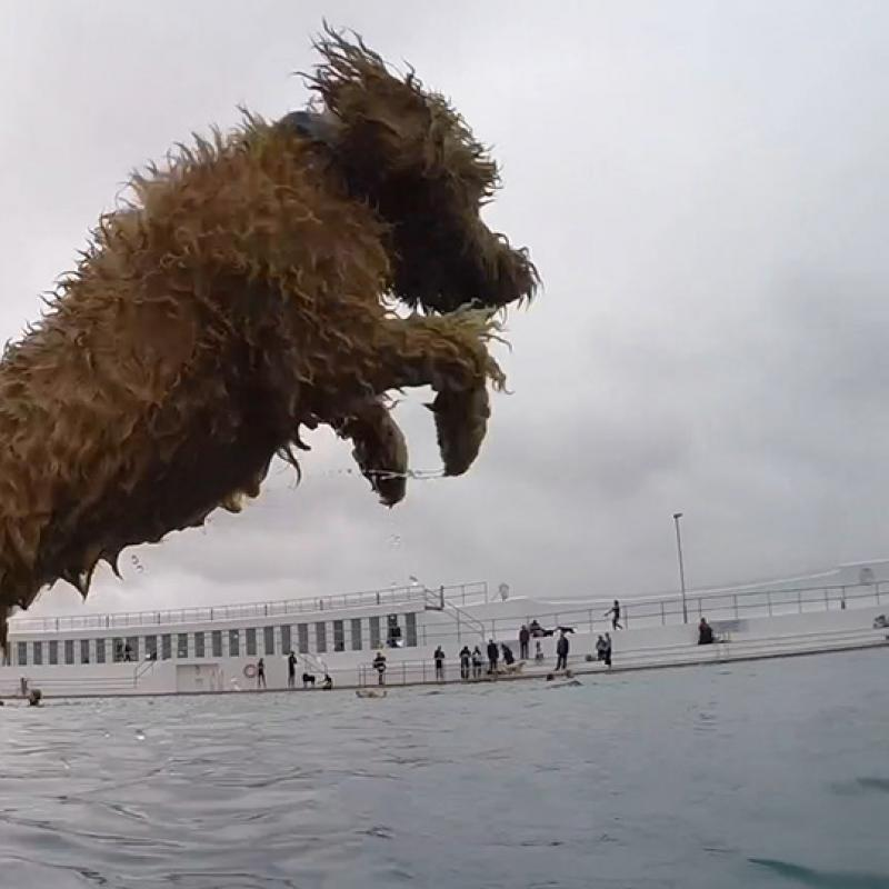Dog launches into Jubilee Pool