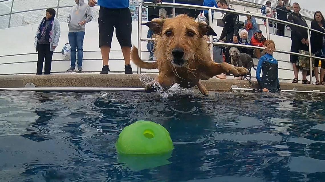 Dog in Jubilee Pool chasing ball